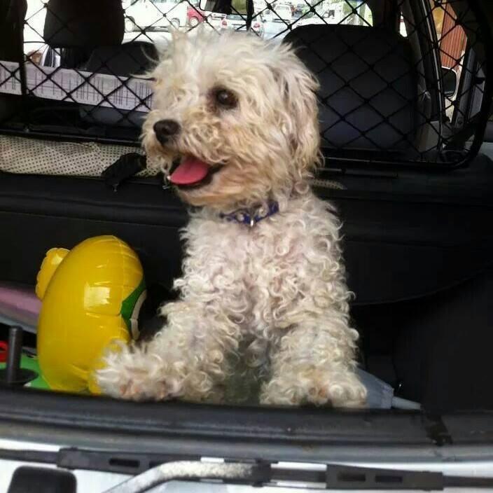Avola, lascia libero in  spiaggia il suo cane, denunciata donna per furto aggravato