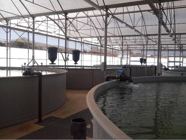 Acquacoltura, un progetto ambizioso ad Acate.
