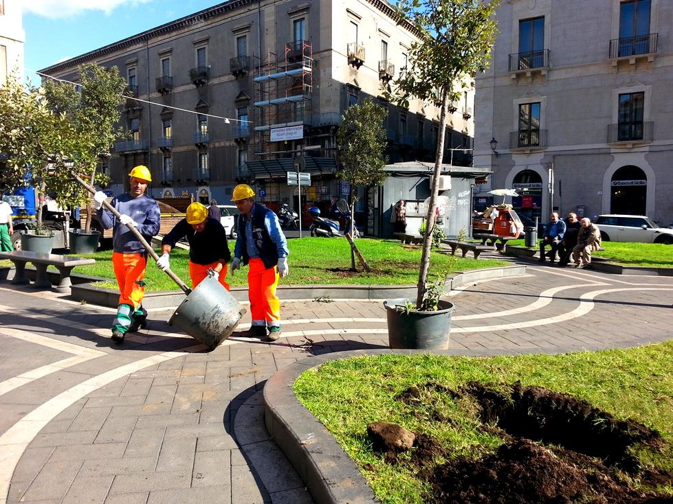 Catania, piantati in piazza Cutelli dodici alberi alti oltre due metri