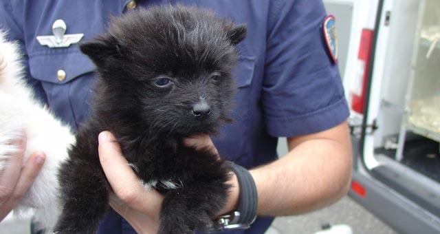 Sequestrati 52 cuccioli di cani provenienti dall'est Europa