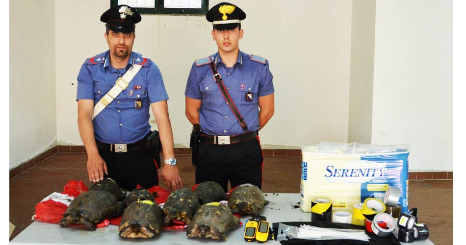 Santa Teresa Gallura. Detenzione di animali protetti: Tre denunciati