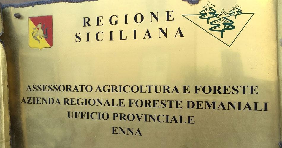 Enna. Due funzionari del Dipartimento Regionale Azienda Foreste Demaniali indagati per tangenti