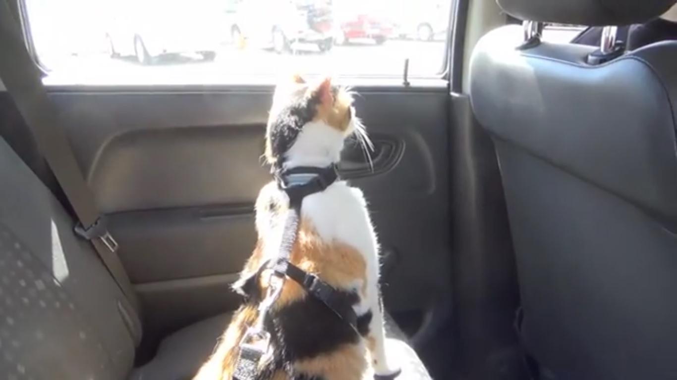 Con il caldo in estate l'automobile è una trappola mortale per gli animali