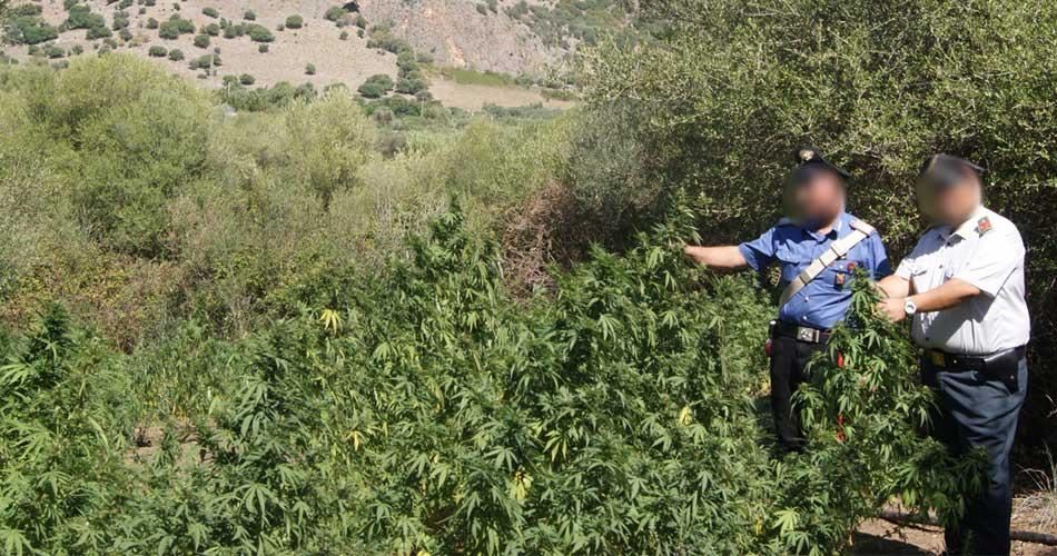 Terrasini. Operazione antidroga, scoperta piantagione di canapa indica, due partinicesi arrestati