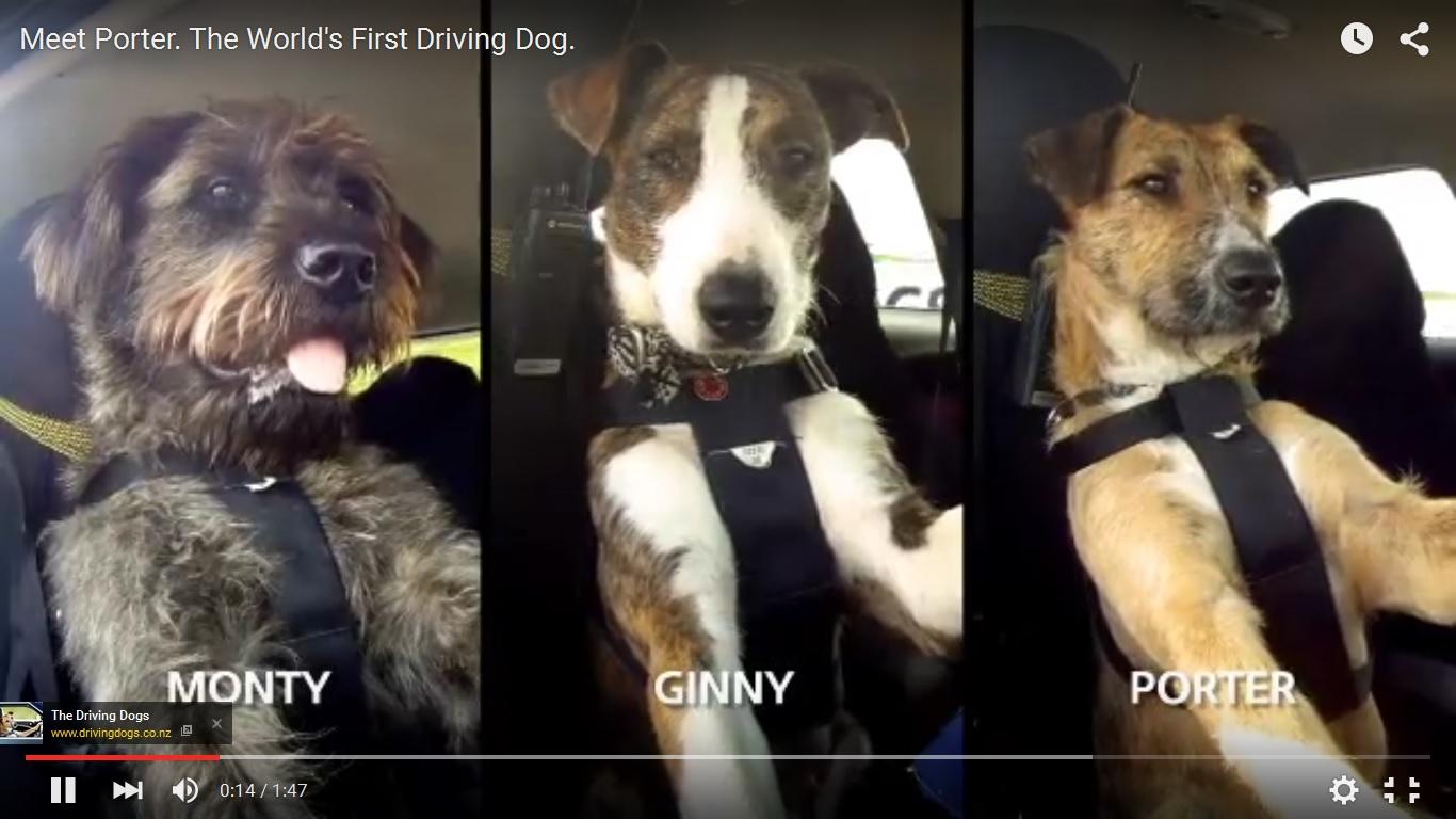 Una guida da cani…