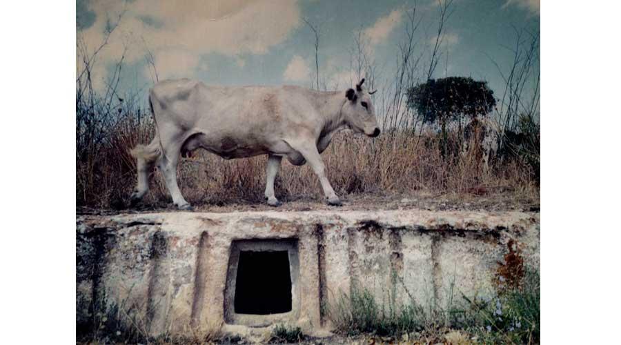 """""""Èis Pegàs, Verso le Sorgenti"""". Si concludono le riprese del primo documentario su Cava Ispica"""