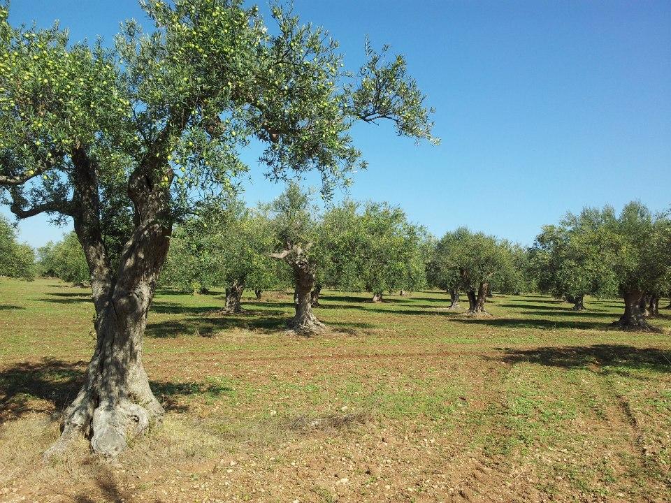 Salute delle piante: I deputati europei intensificano la lotta conto l'afflusso di parassiti verso l'UE