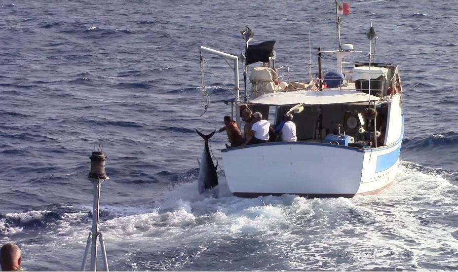 Palermo. Inutile fuga di pescatori di frodo di tonno al largo di Isola delle Femmine