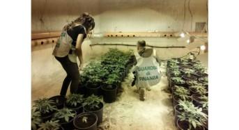Scoperta una piantagione di cannabis a Partinico: Arrestata una persona