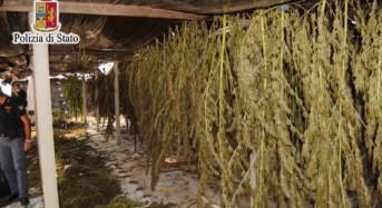 Maxi sequestro di marijuana a Gela: 40 chili per un valore di oltre 450 mila euro