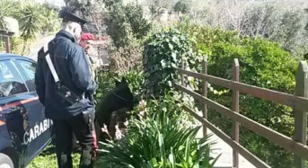Badesi, coltiva marijuana  in casa. Arrestato dai Carabinieri
