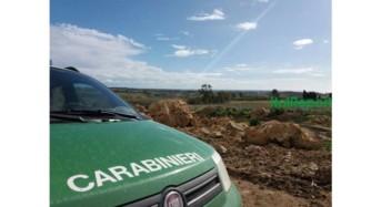 Controlli agroalimentari dei Carabinieri Forestali: Sequestrati 5 quintali di castagne e meloni