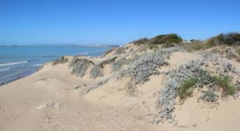 Acate. Ricostruzione e ripascimento della spiaggia di Macconi. Nota dell'amministrazione comunale.