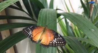 Le notti delle farfalle. Venerdì sera il primo esclusivo appuntamento all'interno della Casa delle Farfalle di Modica