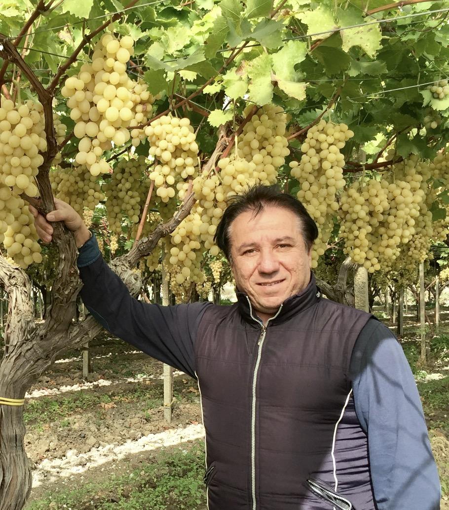 Elezione del presidente del consorzio di tutela dell 39 uva - Uva da tavola di mazzarrone ...