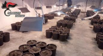 Coltivava marijuana in una serra artigianale: 34enne arrestato dai carabinieri