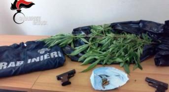 """Lui nascondeva le armi mentre la giovane badante si dedicava a coltivare """"erba"""": Arrestati"""