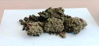 Tremestieri Etneo. Deteneva mezzo Kilo di marijuana a casa. Arrestato un 43enne