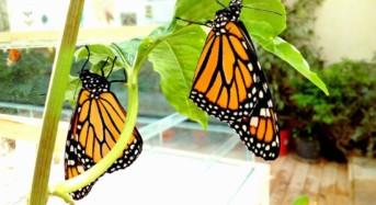 Chiude sostenendo un'iniziativa benefica l'edizione 2017 della Casa delle Farfalle di Modica