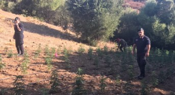 Scoperta piantagione con circa duemila piante di marijuana: Il guardiano arrestato dai carabinieri