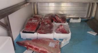 Pozzollo. Tonno rosso pescato abusivamente: Verbale da €8.000