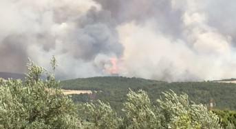 """Incendi. M5S alla Camera e all'Ars annunciano un esposto contro la Regione: """"Il governo Crocetta è responsabile"""""""