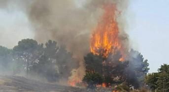 """Minardo: """"Crocetta incapace, serve commissariamento statale per gestire l'emergenza incendi"""""""
