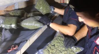 Serra indoor di marjuana a Isola Capo Rizzuto, un arresto dei Carabinieri