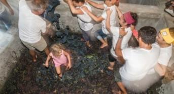 Puglia Enoturismo.  la Festa de Lu Capucanali, il rito della vendemmia antica con i canti popolari e il pranzo fra i filari di uva