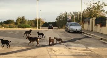 """Partecipiamo Ragusa, la denuncia: """"I branchi di cani randagi si moltiplicano"""""""