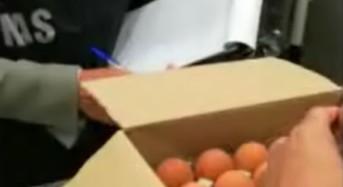 Uova contaminate dal Fipronil, ecco i primi esiti dei controlli dei Carabinieri NAS (VIDEO)