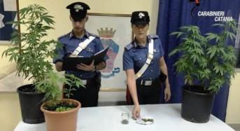 Riposto, coltivava marijuana a casa. Arrestato