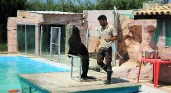 Agosto allo Zoo d'Abruzzo, per conoscere ed amare gli animali, alla scoperta dei nuovi cuccioli, con un team esclusivo