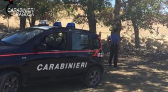Giarratana. Ritrovato dai carabinieri intero gregge di animali appena rubato
