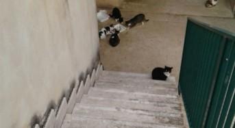 """Fisascat-Cisl denuncia: """"Condizioni igieniche precarie nelle aree di pertinenza dell'ospedale Paterno Arezzo a Ragusa"""". Riceviamo e pubblichiamo"""