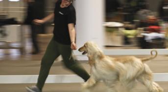Hit Dog Show: Alla fiera di Vicenza 1.500 cani di razze diverse