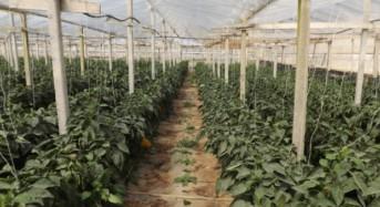 CROLLO DEI PREZZI IN AGRICOLTURA