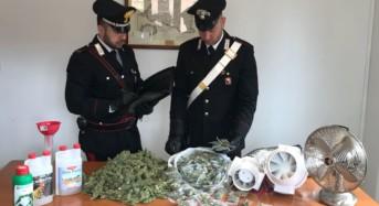 Misilmeri. Scoperti con oltre 1 kg di marijuana in casa, quattro persone arrestate dai carabinieri