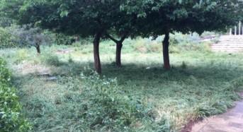 """Parco Giovanni Paolo II in pieno abbandono, Chiavola (Ragusa in movimento): """"trascuratezza non giustificabile"""""""