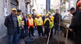Legambiente Catania, 100 alberi con il crowdfunding