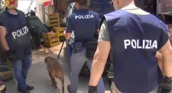Piazza Armerina. Operazione«Marijuana Park»: Debellata dalla Polizia di Stato attività di spaccio di sostanze stupefacenti