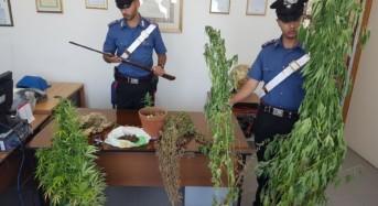 Continua l'operazione Pozzallo sicura: altri quattro arresti dei Carabinieri