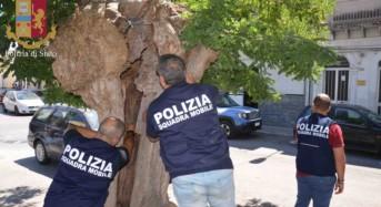 """Vittoria. La Polizia di Stato arresta spacciatore in Piazza Senia a Vittoria grazie ad una segnalazione tramite l'App """"Youpol"""""""