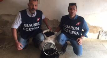 Caucana, sequestrati 1000 esemplari di ricci di mare. Scatta verbale di 4000 euro.