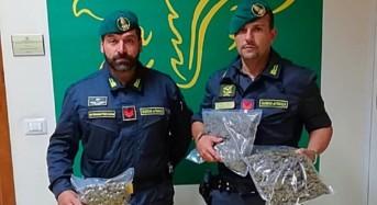 Catania. Sequestrati 2 kg. di marijuana a casa di un soggetto sottoposto ad arresti domiciliari