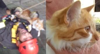 Vittoria, disavventura per un gatto. Finisce in un pozzo, i Vigili del Fuoco lo salvano