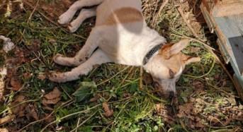 Acate. Consiglio comunale straordinario contro l'avvelenamento di cani e gatti.