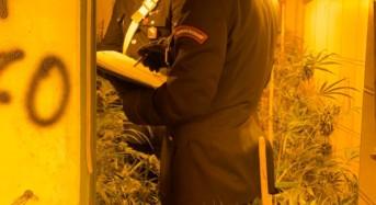 I carabinieri scoprono una piantagione indoor in un casolare di campagna: In manette due giovani