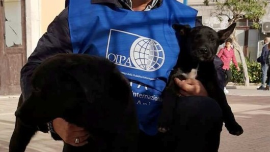 Acate. Il volontario dell'O.I.P.A., Riccardo Zingaro chiede al Comune l'istituzione di un Ufficio per la Tutela degli Animali.